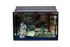 Isolated Fishtank. A glass rectangular fishtank isolated against a white background stock images