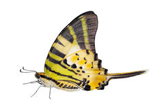 Isolated five bar butterfly on white Royalty Free Stock Images