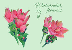 Isolated floral elements of blossom of curcuma Royalty Free Stock Images