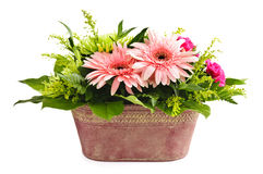 Isolated flower arrangement Royalty Free Stock Photos