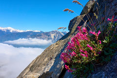 Isolated flower growing on a steep rock wall over the clouds Royalty Free Stock Photos