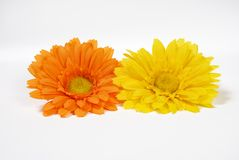 Isolated Flower Heads. Two flower heads isolated on a light background stock images