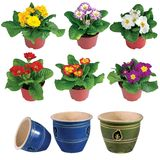 Isolated flower in pot Stock Photo