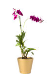 Isolated flower in pot Royalty Free Stock Photos