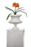 Isolated flower pot Stock Image