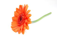 Isolated flower on white Stock Images