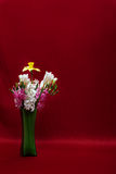 Isolated flowers Royalty Free Stock Photos