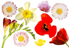 Isolated flowers. Colorful flowers isolated on white background royalty free stock photo