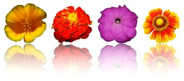 Isolated flowers Royalty Free Stock Photo