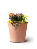 Isolated flowers in clay pot Stock Photo