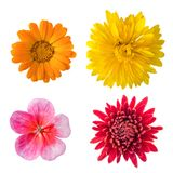 Isolated flowers set. Of 4 pieces Stock Photography