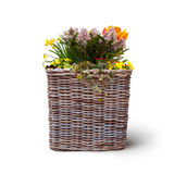 Isolated flowers in wickerwork basket Royalty Free Stock Images