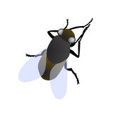 Isolated fly macro. Illustration of realistic fly on blank background Royalty Free Stock Photos