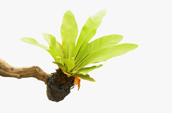 Isolated foliage Stock Image