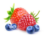Isolated fresh berries Stock Image