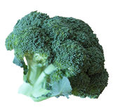 Isolated fresh broccoli Stock Image
