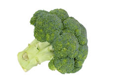 Isolated fresh broccoli Stock Photography