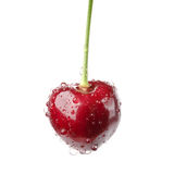 Isolated Fresh Cherries With Water Drops Royalty Free Stock Photos