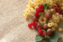 Isolated fresh gooseberries and red currants. Fresh gooseberries and red currants on green leaves Stock Images