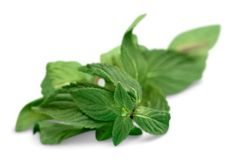 Fresh mint leaves isolated on white background. Isolated fresh leaves mint green color white Royalty Free Stock Image
