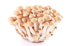 Isolated fresh mushroom group Stock Image