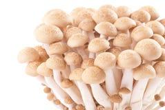 Isolated fresh mushroom group Royalty Free Stock Photography
