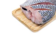 Isolated fresh Nile Tilapia fish Stock Image