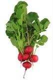 Isolated fresh radish Royalty Free Stock Photography