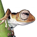 Isolated frog Stock Photo
