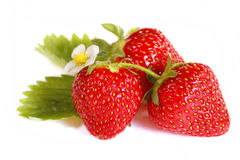 Isolated fruits - Strawberries Stock Image