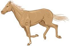 Isolated galloping palomino Royalty Free Stock Photo