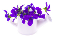 Isolated Garden design-bouquet of purple flowers in white wateri Stock Images