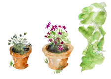 Isolated garden pots Stock Images