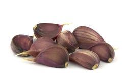 Garlic clove isolated on white background. Isolated garlic. Garlic clove isolated on white background Royalty Free Stock Photos