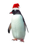 Isolated gentoo penguin. Gentoo penguin isolated over white with red Santa's hat stock images