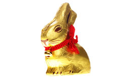 Isolated golden chocolate Easter bunny royalty free stock photo