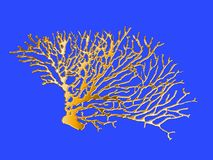 Isolated golden image of coral branches Stock Photography
