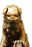 Isolated golden lion Stock Photos