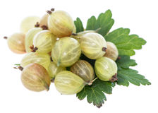 Isolated Gooseberries Stock Image