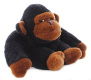 Isolated Gorilla Stuffed Animal Stock Images