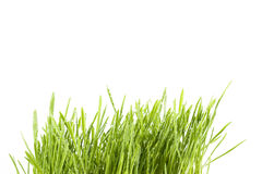 Isolated grass Royalty Free Stock Images