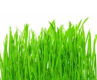 Isolated Grass Stock Image