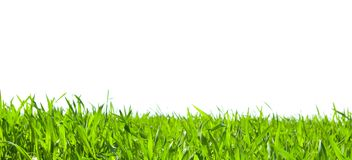 Isolated grass Royalty Free Stock Image