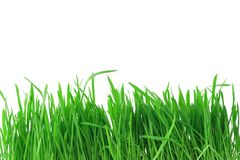 Isolated grass background Stock Images