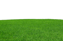 Isolated grass field Royalty Free Stock Image
