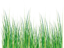 Isolated grass illustration Royalty Free Stock Photos