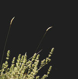 Isolated grass. Image of isolated grass Royalty Free Stock Images