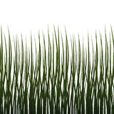 Isolated grass (Seamless texture) Stock Image