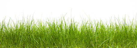 Isolated grass. Grass isolated on white background Royalty Free Stock Photography
