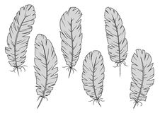 Isolated gray quill feathers set Stock Photo